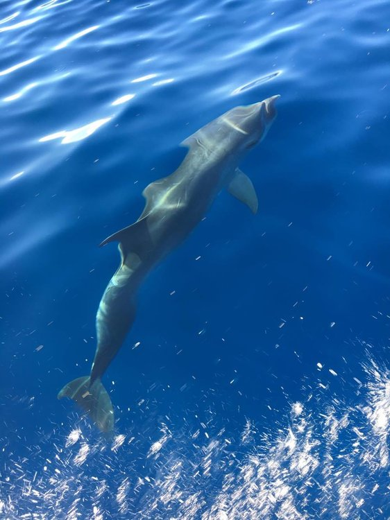 delfin.thumb.jpg.c91c8186fb4b71d533ae3e4a370d3d03.jpg